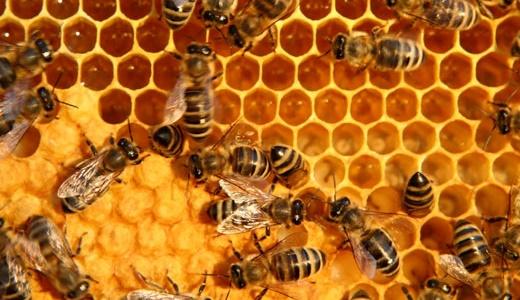 ไฟโต รอยัล เจลลี่ (Phyto Royal Jelly) ผลิตภัณฑ์อาหารเสริมจากนมผึ้งแท้